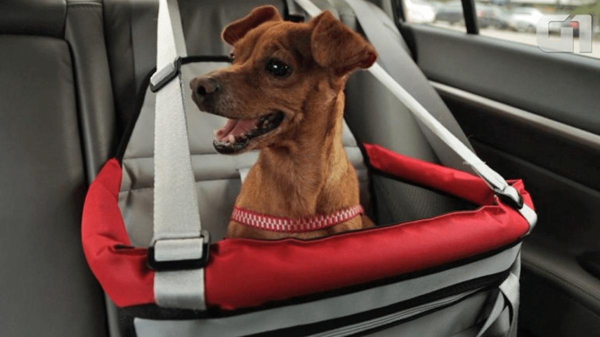 Detran SP orienta pets no carro